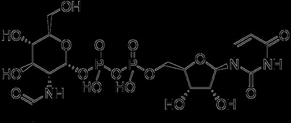 """N-acetyl""-glucosamine-la-gi"